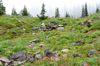 CH140815_Mt.Adams_KillenCreek_029
