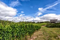 CH160705_RedmanVineyard_055-Edit